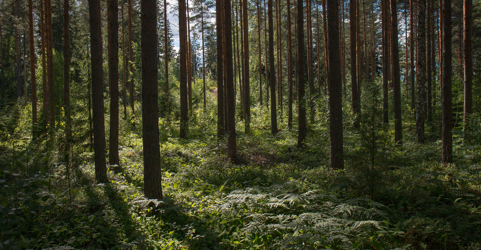Forest - symbolic image for sustainability of Mila-wall products by MBA